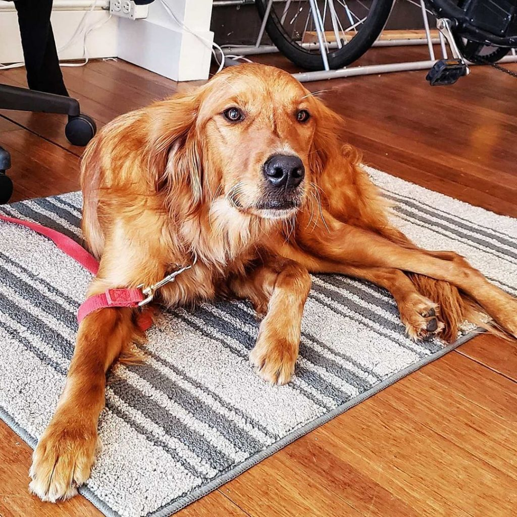 Well behaved doggos are always welcome at our Division location!